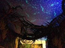 ジャングルの中のプチ個室 星空