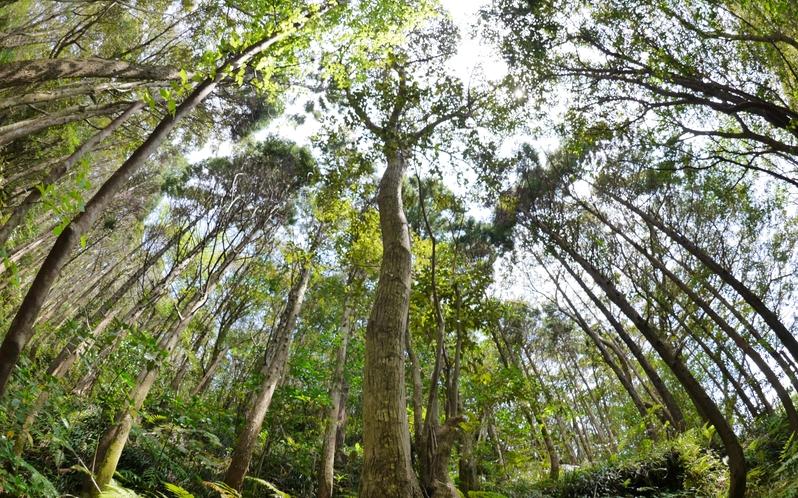 ポットポールの原生林