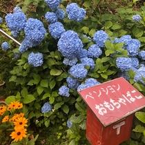 初夏のフォトスポット(アジサイ・ルドベキア)