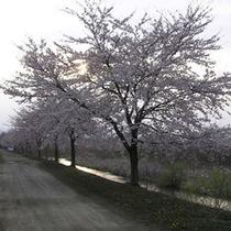 *春には周辺の川沿いで桜をご鑑賞いただけます。
