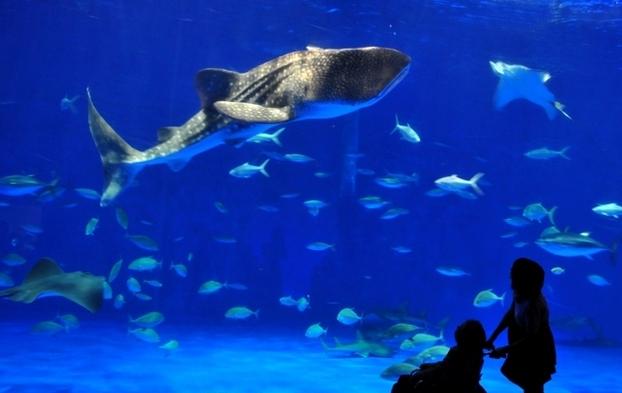 【TRY!九州】ユウユウに会いに行こう!鹿児島水族館(いおワールド)チケット付プラン☆◆