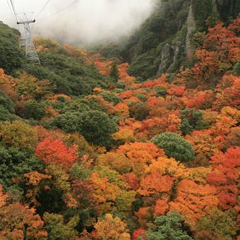 【秋の寒霞渓】