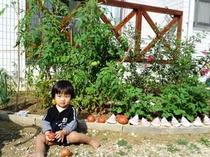 庭でトマトがなったよ