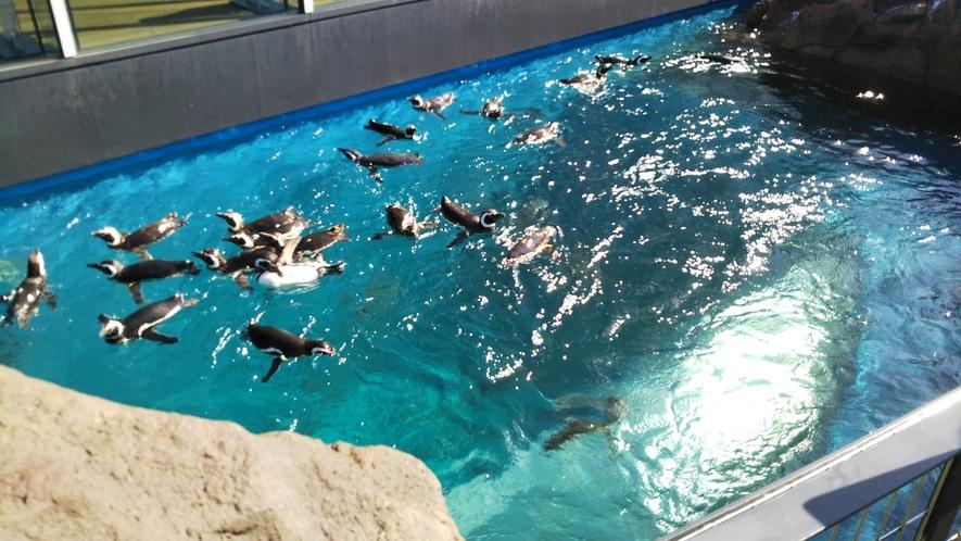 上越市立水族博物館 うみがたり ペンギンプール