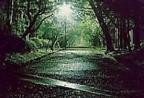 弥彦公園 冬