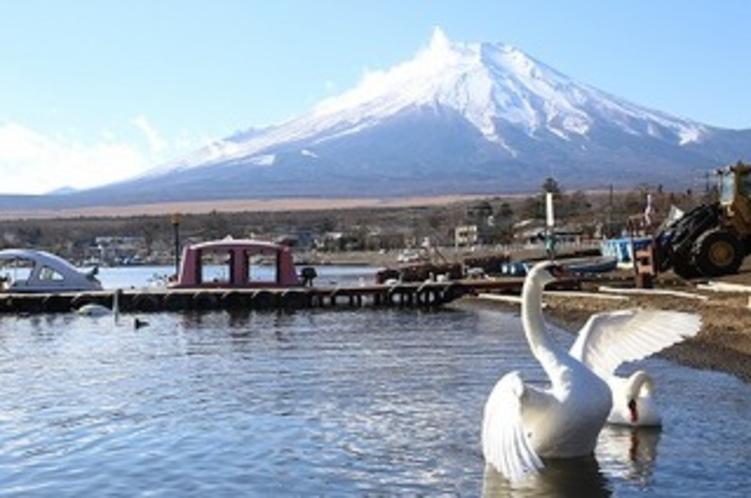 冬の山中湖と白鳥