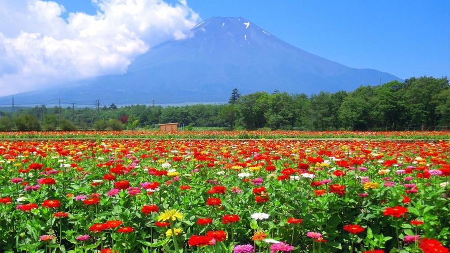 ○花の都公園