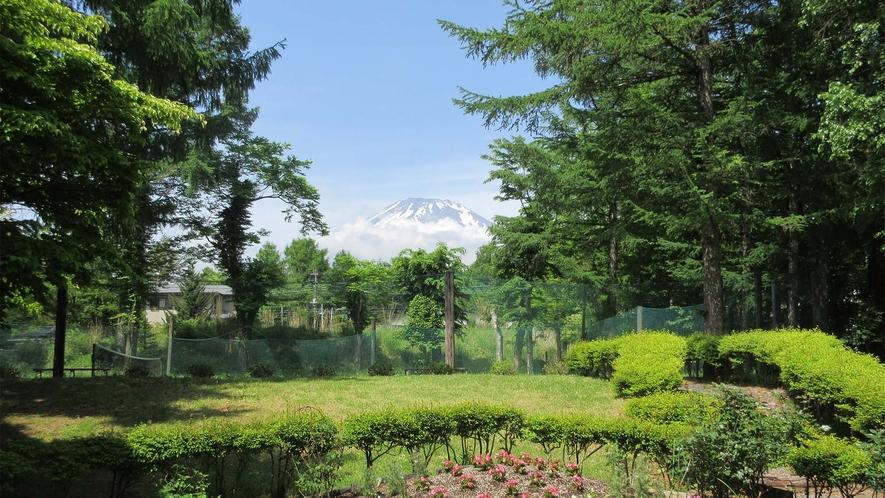○庭からの富士山