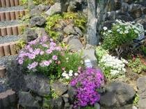 お庭に咲く四季の花々