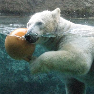★旭山動物園が2日間楽しめる!旭山動物園おもてなし券付プラン【素泊り】
