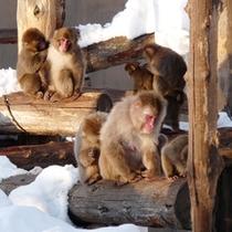 冬の旭山動物園 サル