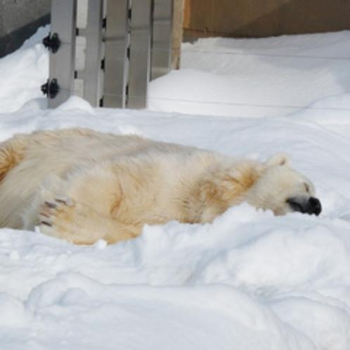 冬の旭山動物園 シロクマ
