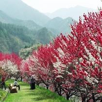 「花桃まつり」の期間中は花桃シャトル運航予定。