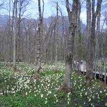 ◇戸隠森林植物園