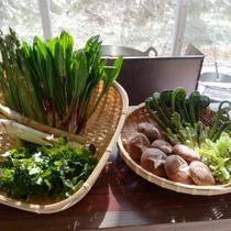◆山菜の一例