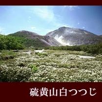 白つつじと硫黄山