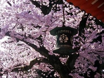 春の京都 イメージ