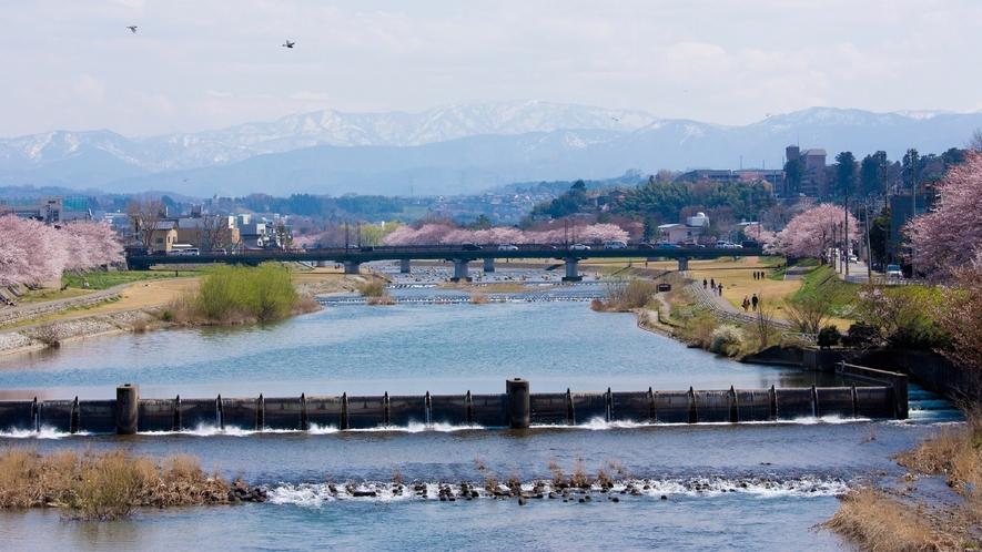 犀川(春の様子)(写真提供:金沢市)
