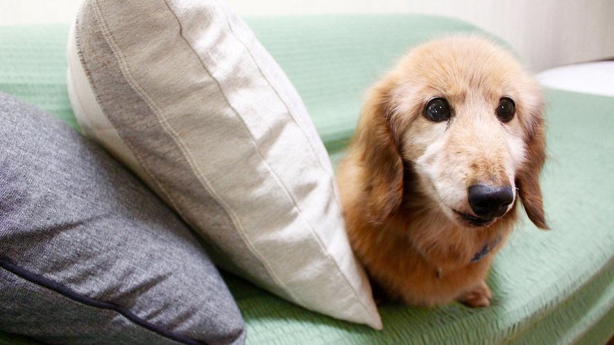 【ペット同宿部屋】犬・猫・鳥など大切なペットと一緒にお泊りできます!(限定1室)