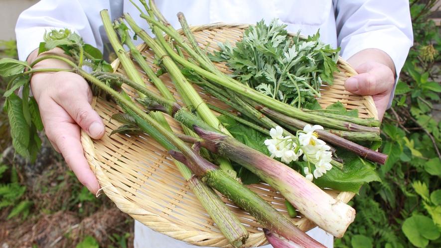 春には周囲の山で手摘みする山菜料理も。