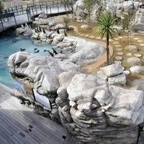ペンギン村 温帯ゾーン