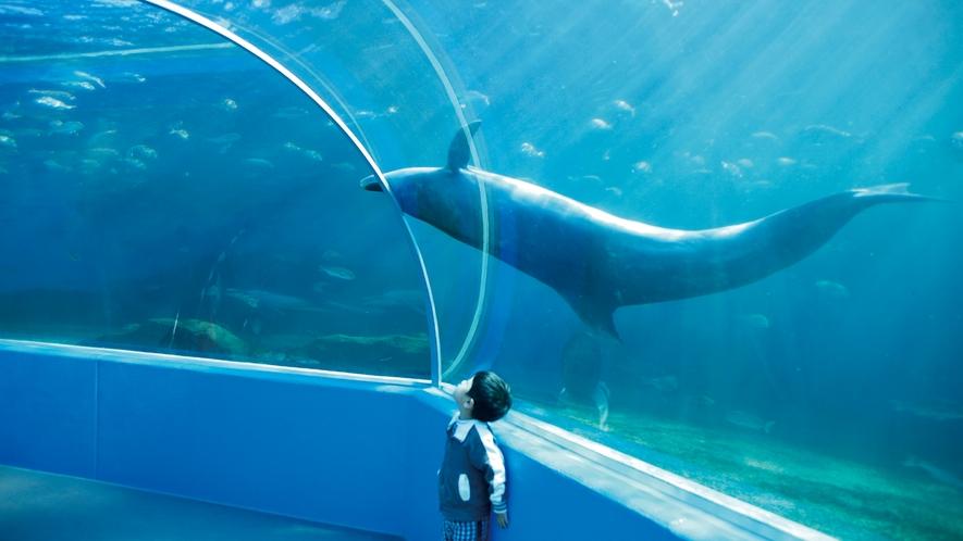 ◆のとじま水族館