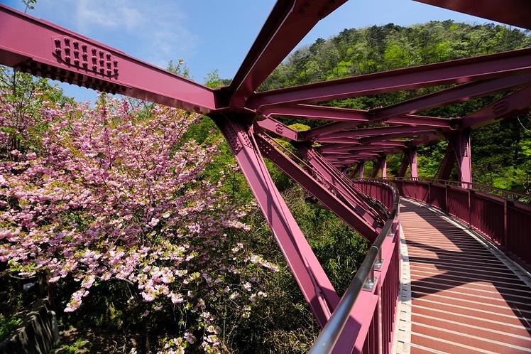 あやとり橋 桜