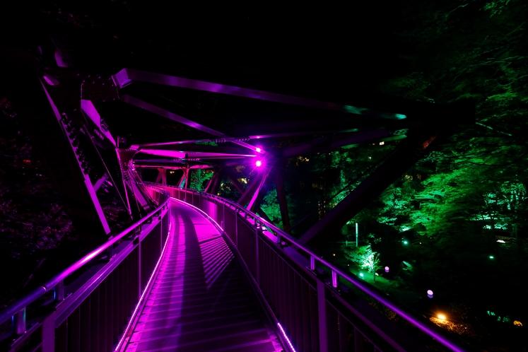 鶴仙渓 あやとり橋ライトアップ
