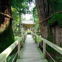 【栢野の大杉】徒歩約30分。樹齢2300年と言い伝えられている御神木で国の天然記念物です。