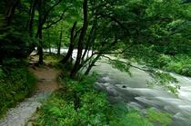 鶴仙渓 遊歩道