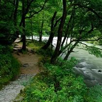 【鶴仙渓 遊歩道】徒歩約15分。川のせせらぎを聞きながらリフレッシュしてみてはいかがでしょう?