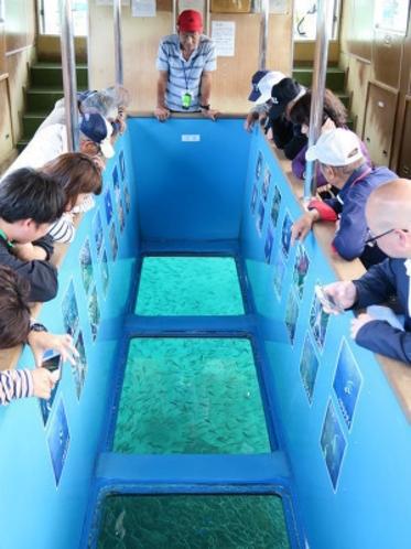 竜串海域公園 グラスボート(竜串観光汽船)