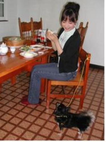 ペットと一緒の食堂