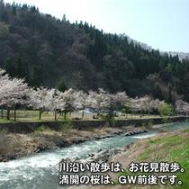 小野川温泉で桜散歩