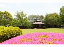 ホテルの広い庭には季節のお花が