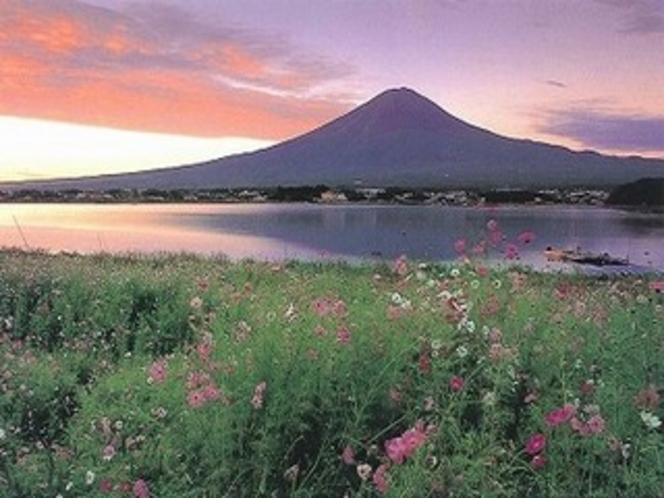 富士山と秋桜(8〜9月)