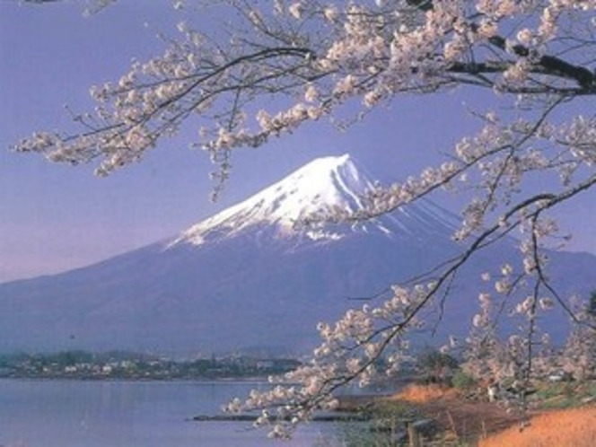 富士山と桜(5月)