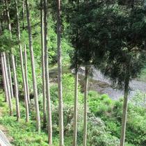 【客室からの眺め】眼下には上桂川の清流が眺められます