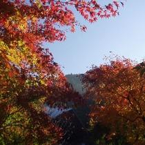 【翠峰荘の四季:秋】木々が赤や黄色に色づきます