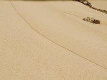 ヨナマビーチの波紋