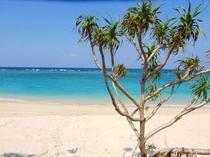 ヨナマビーチのアダン