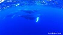 海中のクジラ