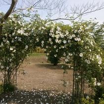 【ドッグラン】季節によって、様々なお花が咲きます。たくさんのお花にワンちゃんもきっと大喜び★