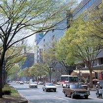 仙台駅から仙台城跡までまっすぐ伸びるメインストリート【青葉通り】