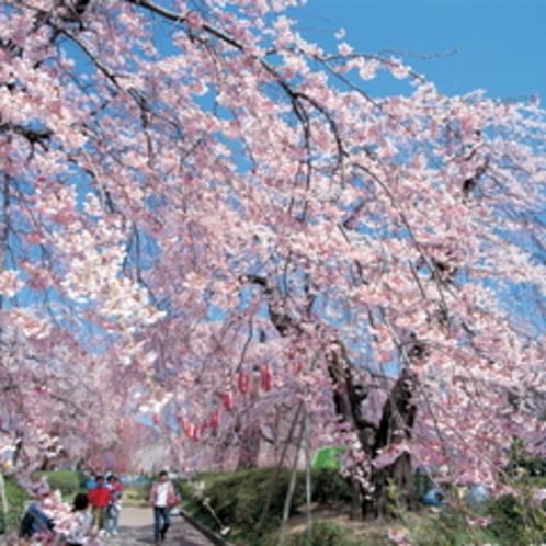 仙台の桜の名所といえばここ♪ホテルより車で約8分。【榴ヶ岡公園】