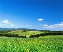 大平高原牧場