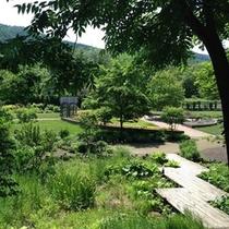 【マウレの庭】夏