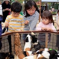 【神戸どうぶつ王国】可愛い動物がいっぱい◎