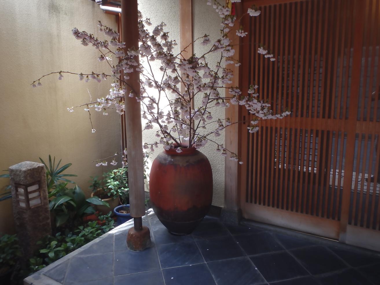 禿庵 内玄関前 春 桜