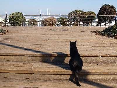 港の見える丘公園より